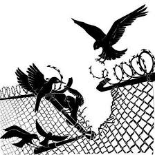 birds tearing down a razor wire fence